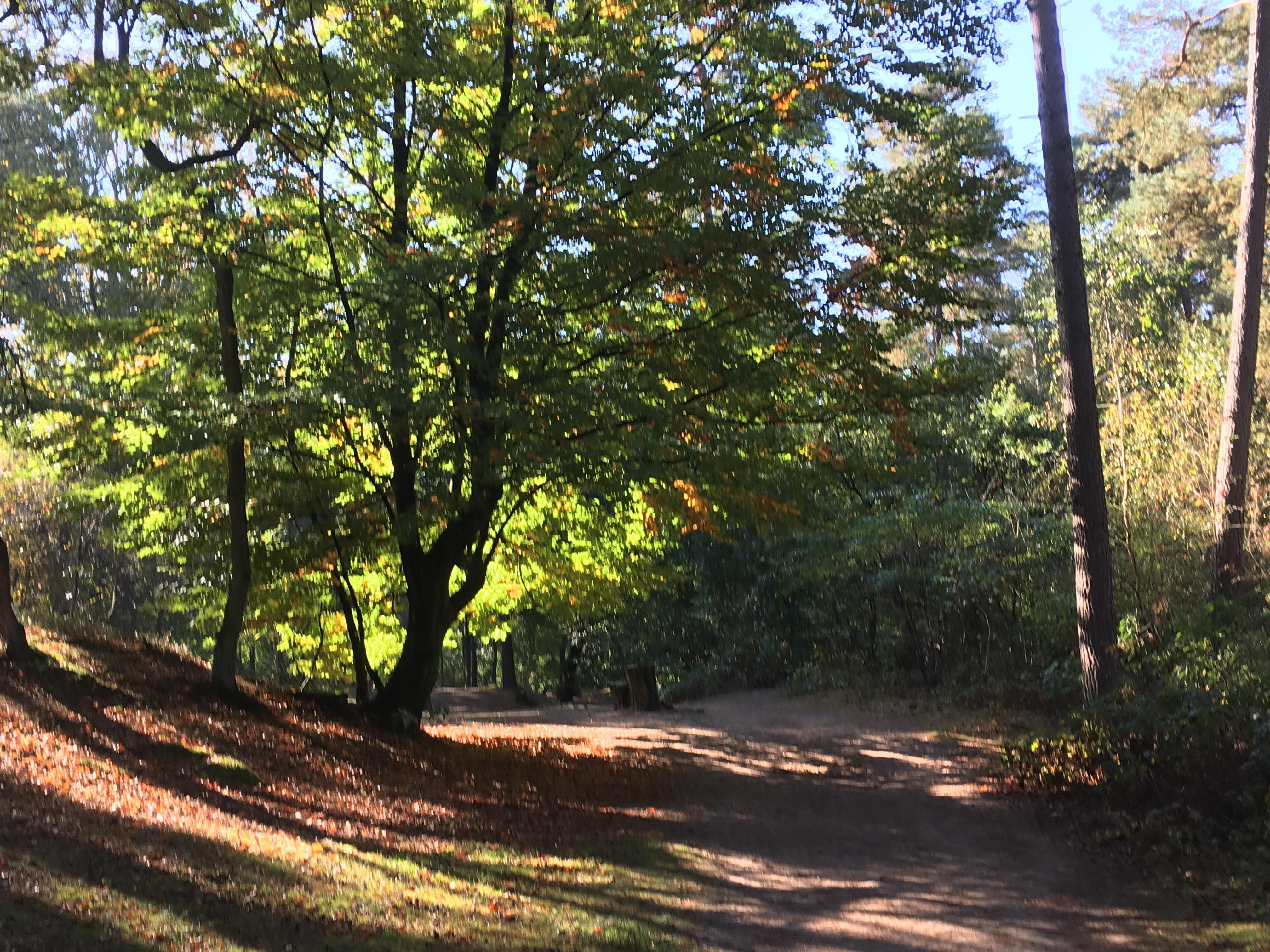 Bos bij Landal Heideheuvel