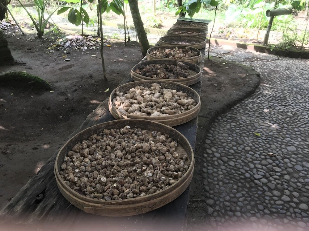 koffieplantage bali